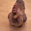 5 verschillende Keramische grote dieren-370